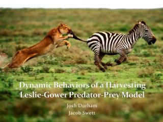 Dynamic Behaviors of a Harvesting  Leslie-Gower Predator-Prey  Model