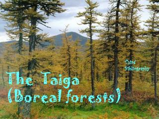 The  Taiga (Boreal forests)