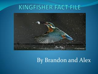 KINGFISHER FACT FILE
