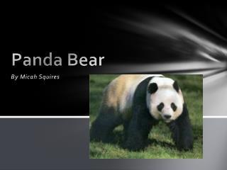 Panda  B ear