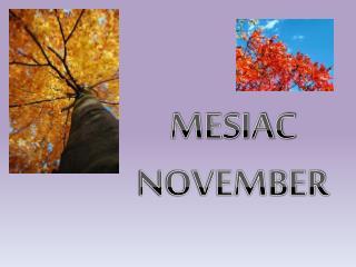 MESIAC NOVEMBER