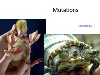 Mutations Spiderman bite