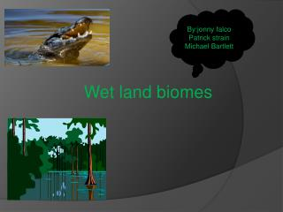 Wet land biomes