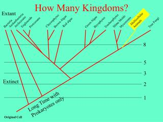 How Many Kingdoms
