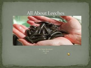 All  About Leeches