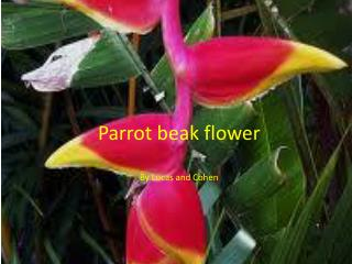 Parrot beak flower By  L ucas and Cohen