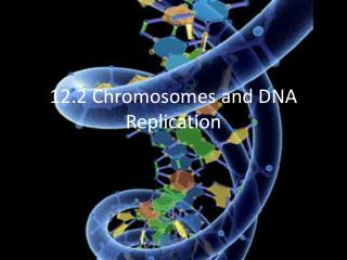 12.2 Chromosomes and DNA Replication