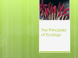 The Principles of Ecology