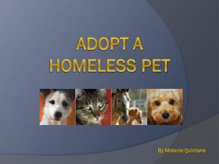 Adopt a homeless pet