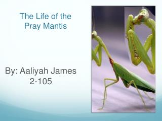The Life of the Pray Mantis