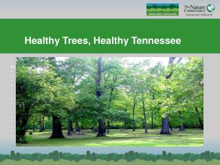 Healthy Trees, Healthy Tennessee