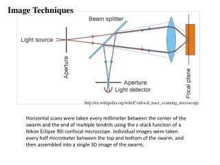 en.wikipedia/wiki/Confocal_laser_scanning_microscopy