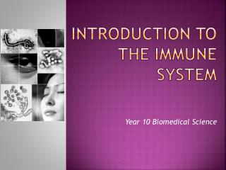 Introduction To The Immune System