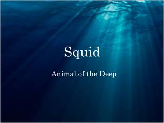 PPT - Firefly Squid PowerPoint Presentation - ID:2206856