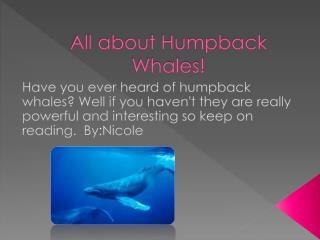 All about Humpback Whales!
