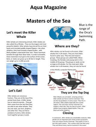 Let's meet the Killer Whale