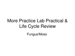 More Practice Lab Practical & Life Cycle Review