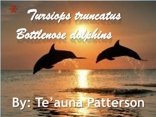 Tursiops truncatus Bottlenose dolphins