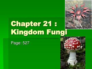 Chapter 21 : Kingdom Fungi