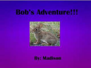 Bob's Adventure!!!