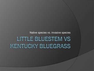 LITTLE BLUESTEM VS KENTUCKY BLUEGRASS