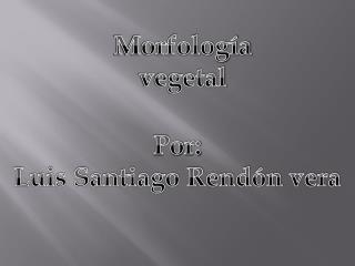 Morfolog�a vegetal