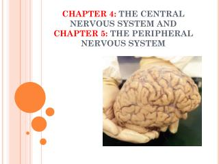 CHAPTER 4:  THE CENTRAL NERVOUS SYSTEM AND  CHAPTER 5:  THE PERIPHERAL NERVOUS SYSTEM