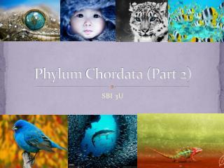 Phylum  Chordata  (Part 2)