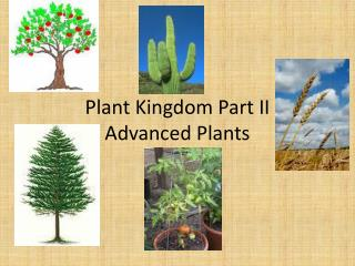 Plant Kingdom Part II Advanced Plants