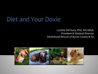 Diet and Your Doxie