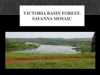 Victoria Basin Forest- SAVANNA MOSAIC