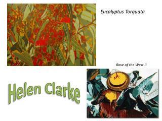 Eucalyptus  T orquata