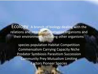 species population the population of a specific species