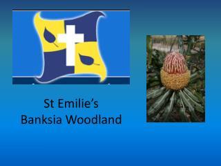 St Emilie's Banksia  Woodland