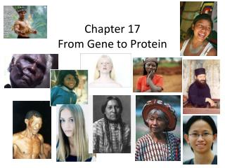 Chapter 17 From Gene to Protein