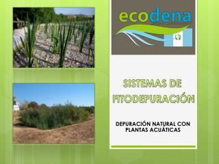 DEPURACIÓN NATURAL CON PLANTAS ACUÁTICAS