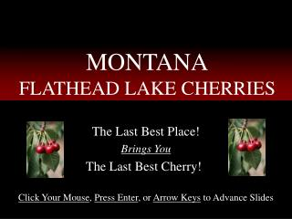 MONTANA FLATHEAD LAKE CHERRIES