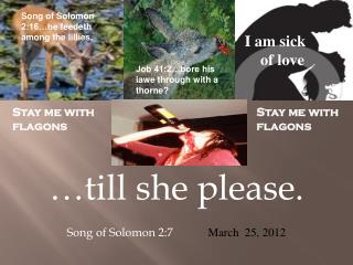 …till she please.          Song of Solomon 2:7 March  25, 2012