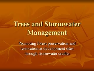 Trees and Stormwater Management