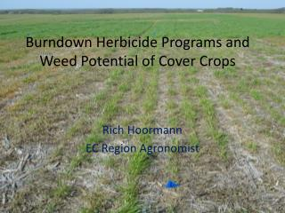 Burndown Herbicide Programs and Weed Potential of Cover Crops