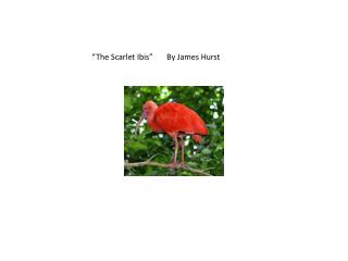 �The  Scarlet  Ibis�       By  James Hurst