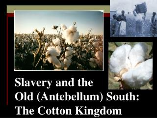 Slavery and the  Old Antebellum South:  The Cotton Kingdom