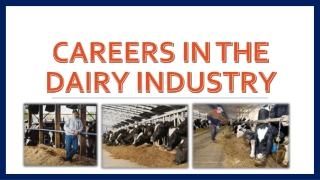 Careers in Dairy