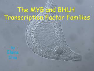 The MYB and BHLH  Transcription Factor Families