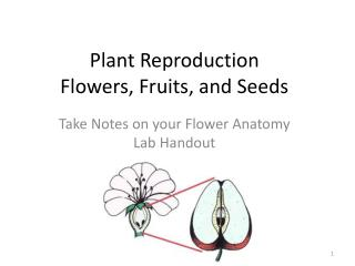 Plant Reproduction Flowers, Fruits, and Seeds