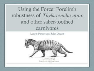 Using the Force: Forelimb robustness of  Thylacosmilus atrox  and other saber-toothed carnivores