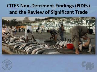 CITES Non- Detriment Findings  ( NDFs ) and the  Review  of  Significant  Trade