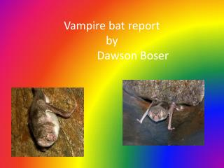 Vampire bat report by                             Dawson  Boser