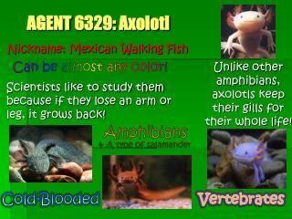 AGENT  6329: Axolotl