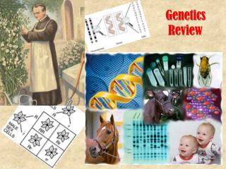 Genetics Revie w